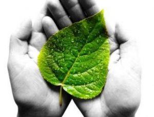Milieuwetgeving-ondernemerszaken-Meesterwerk-voor-ondernemers